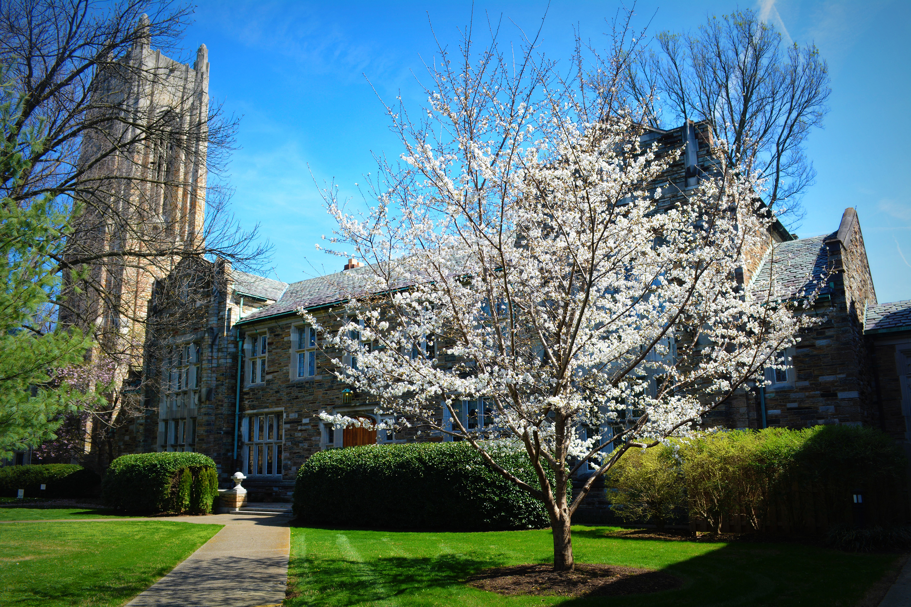 dogwood tree in front of stone building